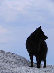 20110512 Fee Mt St Baudille (43)