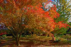Arbre aux couleurs de l'automne
