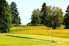 Landschaft in Gelb und Grün