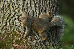 Squirrel (Spider) Man!