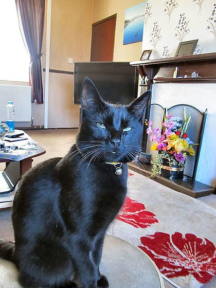 16 haughty cat
