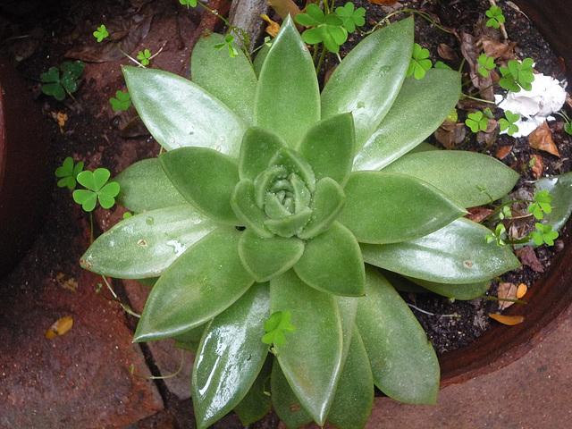 Cactus que semeja una flor