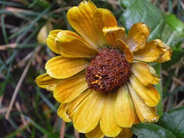 Flor de profundo amarillo