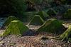 Waverley Abbey Dragon's Teeth Tank Trap X-M1 2