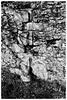 Waverley Abbey ruins X-M1 2