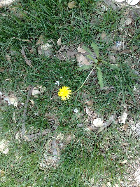 绿丛中一点黄