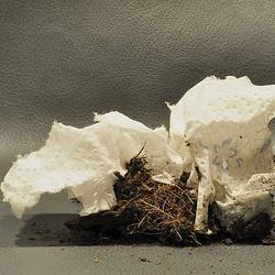 Kokon aus Erde und Küchenpapier