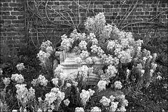Walled garden, Brockwell Park, London SW2.