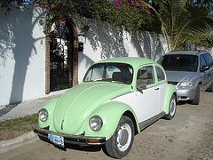 Coccinelle mexicaine / Mexican bug - MEXIQUE / 16 février 2011.