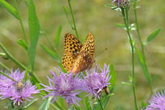 butterfly on flower-CSC 4741
