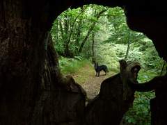 20130620 Fee Arboretum de l'Espaze (14) Ledge