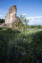 Primavera en las ruinas