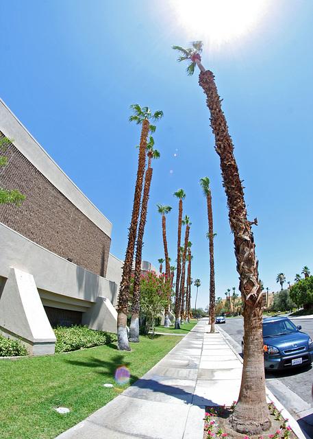 Palm Springs (5908)