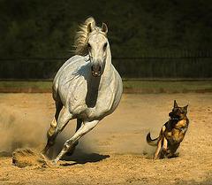 Arabian Horse par Wojtek Kwiatkowski