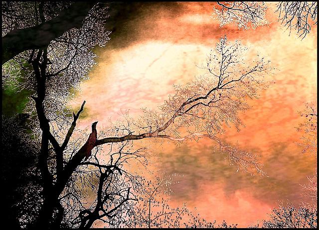le chanteur dans l'arbre