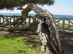 Weather-Worn Tree