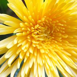 Ĉiam floru Suno!