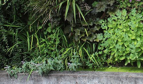 Murs végétalisés - détails (2)