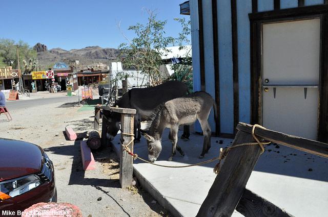 AZ town of oatman 06'14 10