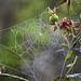 Garden macros (2)