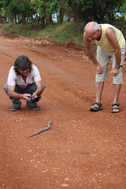 A baby snake