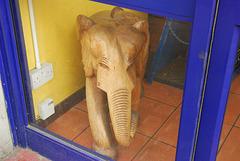 Elephant in the window