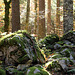 versteinerte Waldgeister
