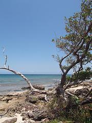 Rivage rocailleux cubain / Cuban rocky shore