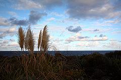 Hierba silvestre y las nubes ............