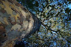 Auprès de mon arbre je vivais heureux , j'aurais jamais dû m'éloigner de mon arbre.....
