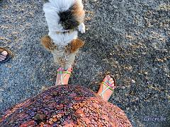 Petit lécheur de Pieds / Cute Feet licker