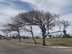 Artistic trees / Arbres artistiques