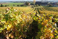 Le vignoble de Champagne (Vaud)...