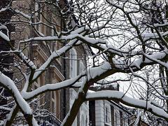 Snow, tree, houses