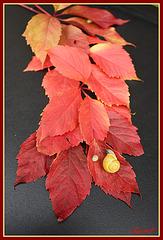 Grappe de feuilles automnales