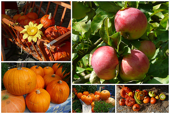 Herbstfrüchte - aŭtunfruktoj