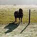 Early morning pony