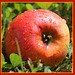 Carré de pomme