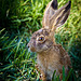Hare in the Moment