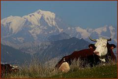 Du sommet du Semnoz vue sur le Mt Blanc