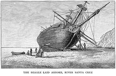 Beagle Laid Ashore
