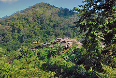 A village in the jungle