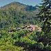A village in the jungle