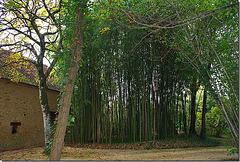 Saint-Chamassy la bambouseraie