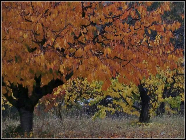 peinture d'automne ...