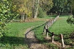 Bois de COOLUS Marne