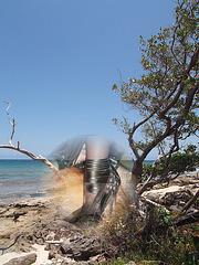 Rivage rocailleux cubain et podoérotique / Cuban rocky and podoerotic shore