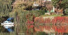 IMG 9447  Rive de Chennevières  BLOG
