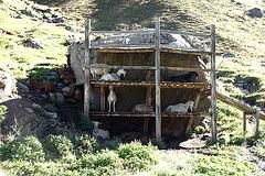 Sonnenstudio für Ziegen