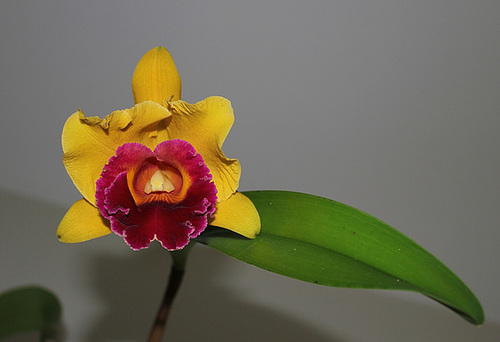 BLC 'Chunyeah' Good Life (2)